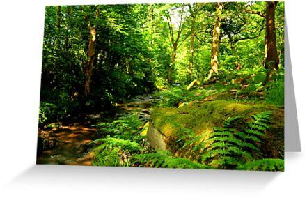 Hawksworth Woods. by tyke29