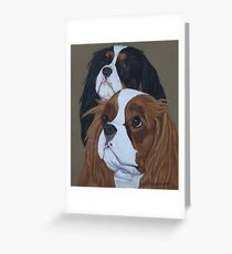 Cavalier King Charles Spaniels Greeting Card