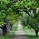 Path from the Churchyard by paulmcardle
