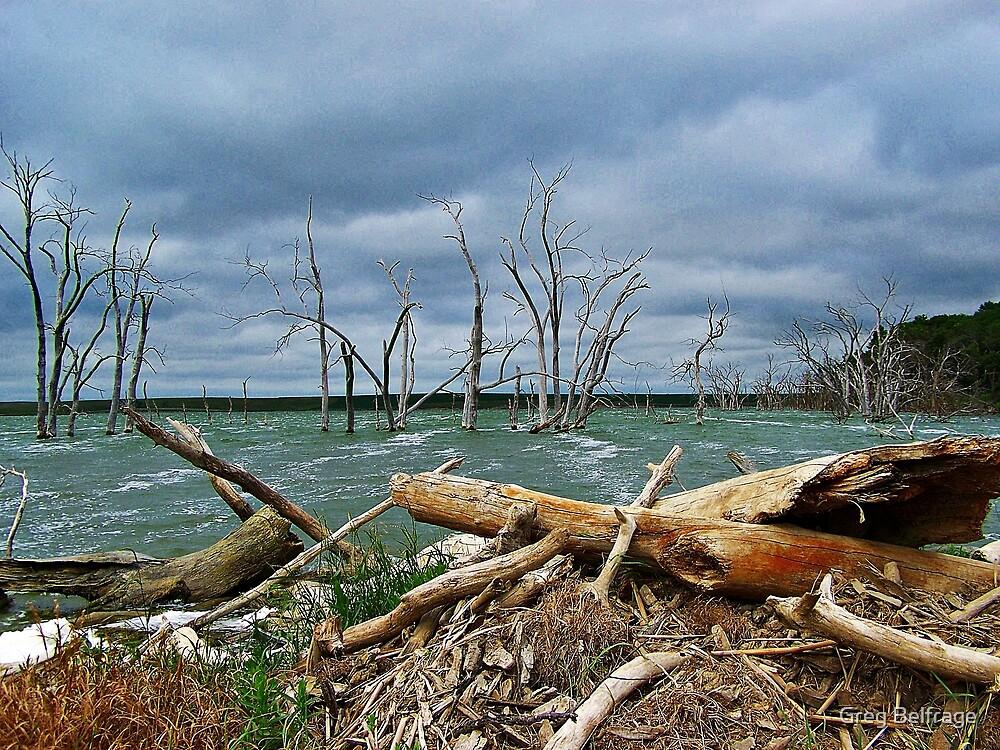 Driftwood Shores by Greg Belfrage