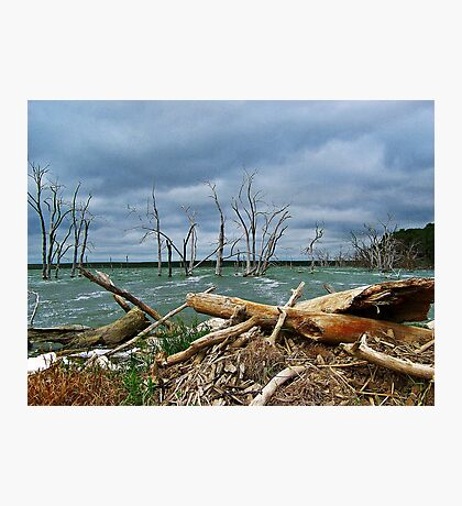 Driftwood Shores Photographic Print