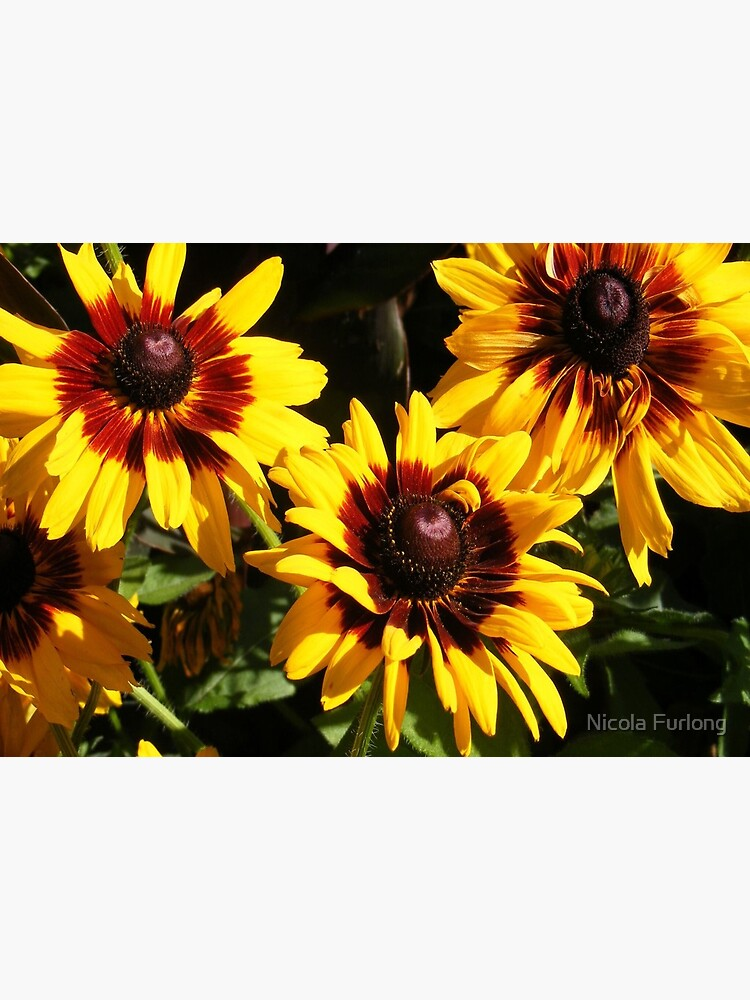YELLOW AND RED SUNFLOWERS, SEEDS AND PETALS by nicolafurlong