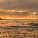 winter swell, redbill. bicheno, tasmania by tim buckley   bodhiimages