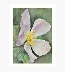 Wild Rose Grunge Art Print