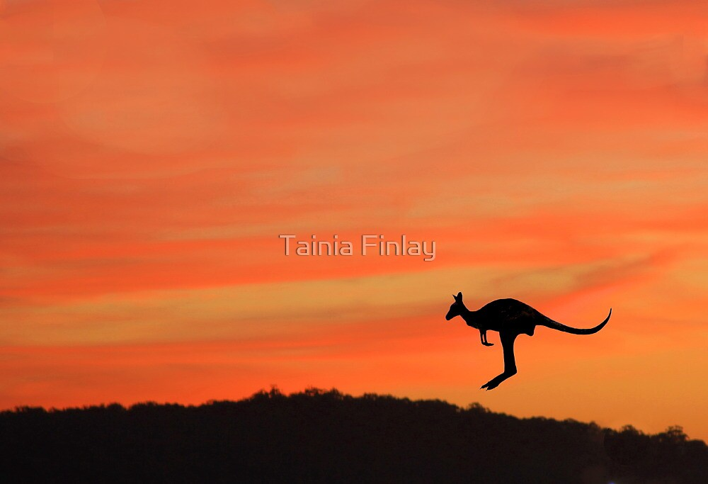 Homeward Bound by Tainia Finlay
