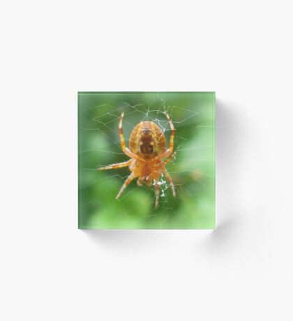 Baby Cross Spider (Araneus) Acrylic Block