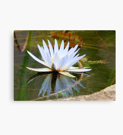 WATER LILLY REFLECTION Canvas Print