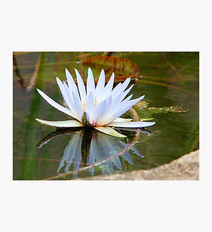 WATER LILLY REFLECTION Photographic Print