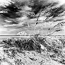 sea oats by james smith