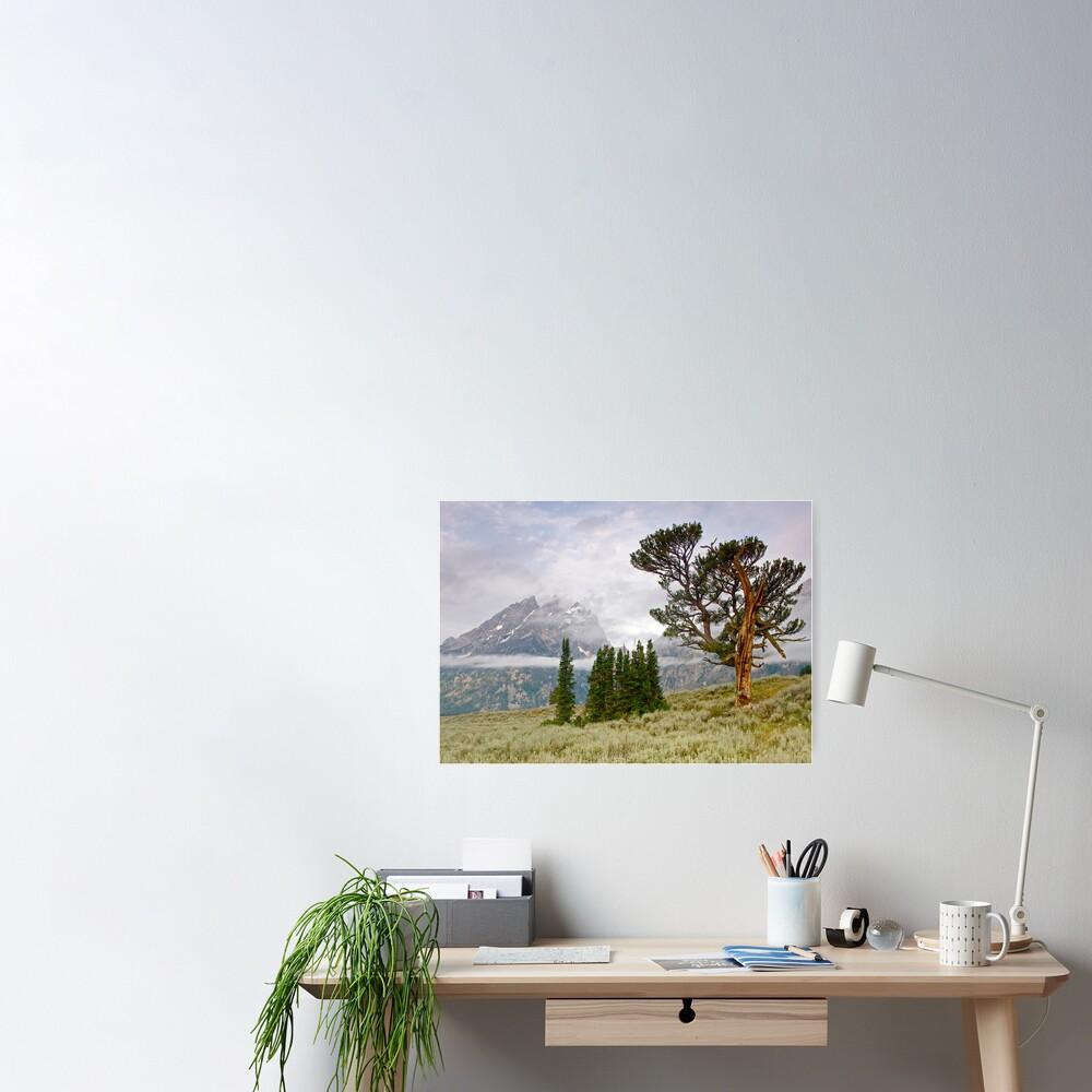 Patriarch Tree and Ribbon Cloud, Grand Teton National Park Poster