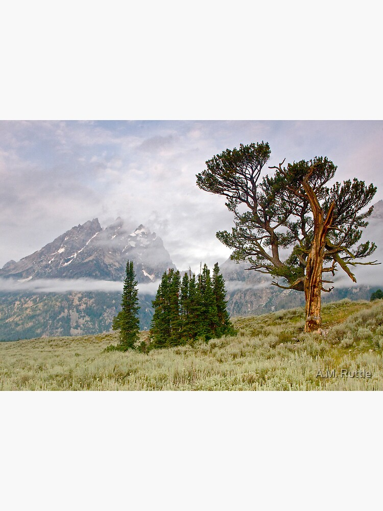 Patriarch Tree and Ribbon Cloud, Grand Teton National Park by annruttle