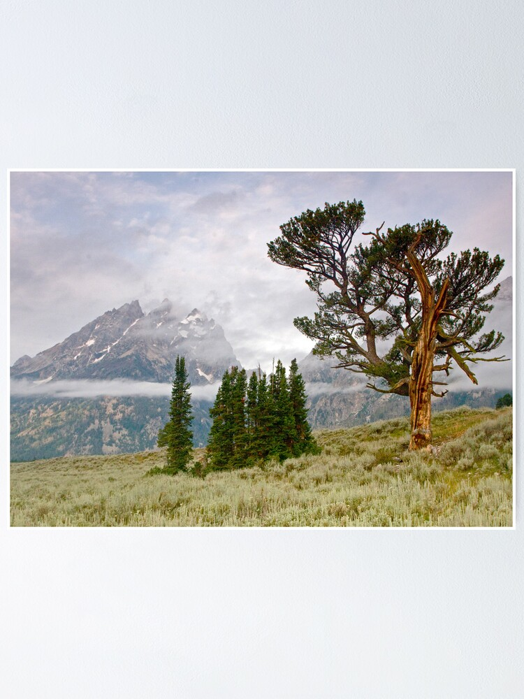 Alternate view of Patriarch Tree and Ribbon Cloud, Grand Teton National Park Poster