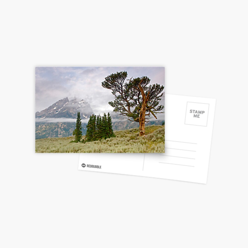 Patriarch Tree and Ribbon Cloud, Grand Teton National Park Postcard