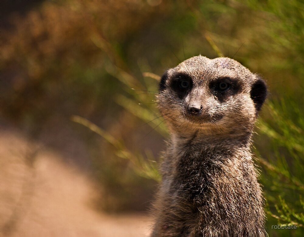 Compare the meerkat.com, compare the market.com by robbtate