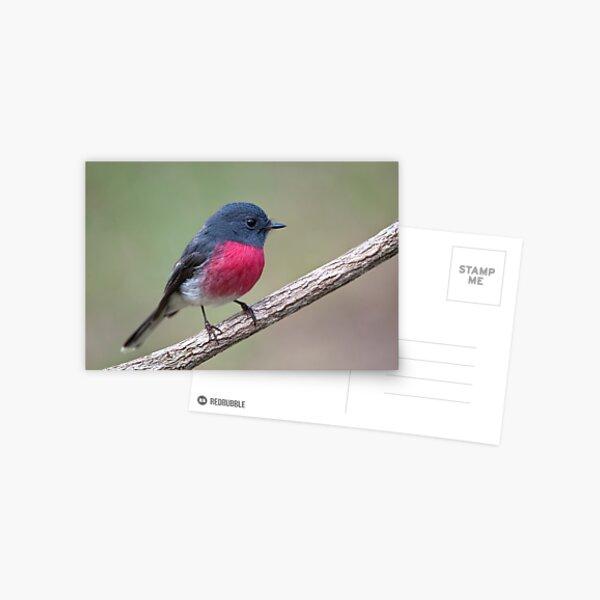 Rose Robin   #2 Postcard
