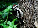 Great Spotted Woodpecker in the garden by Peter Wiggerman