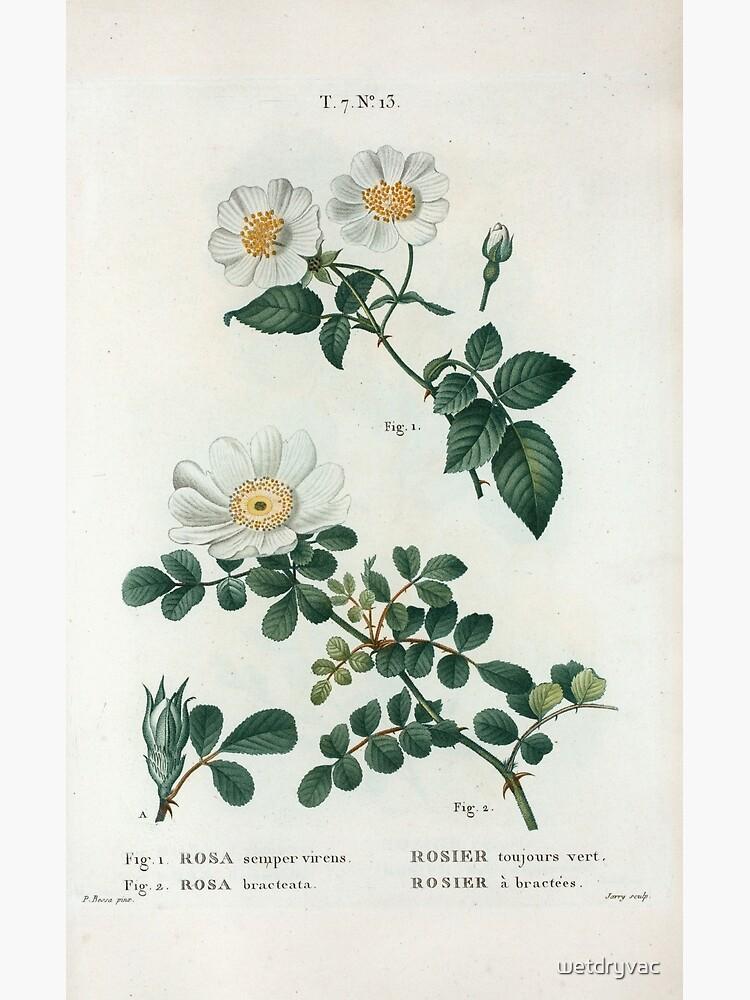 Traité des Arbres et Arbustes 0188 Fig 1 Rosa semper virens Rosier toujours vert Fig 2 Rosa bracteata rosier à bractées Ever green rose Macartney ros by wetdryvac