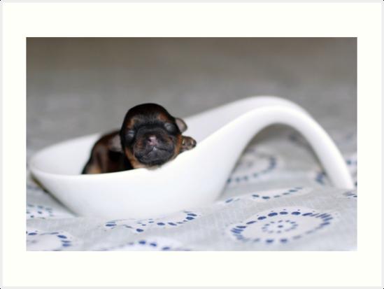 Puppy by Michelle *