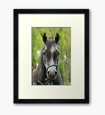 Face of a Gray Horse Framed Print