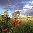 Storm Clouds and Poppies - Strawberry fields by technochick