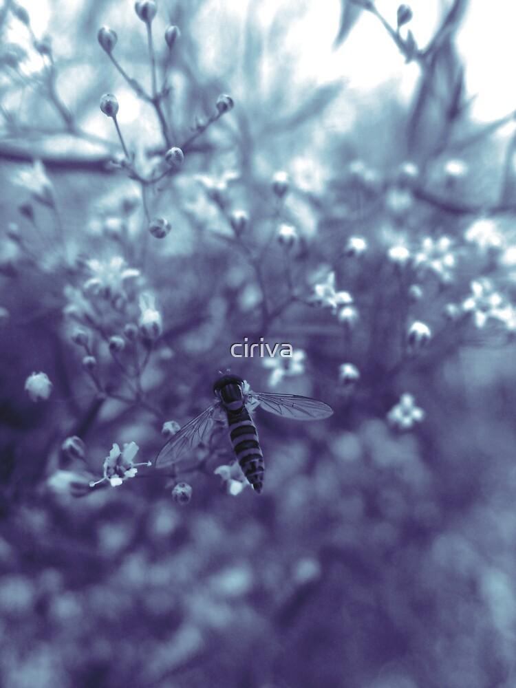 Baby's breath_02 by ciriva