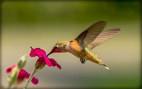 FEEDING FROM FLOWERS by Sandy Stewart