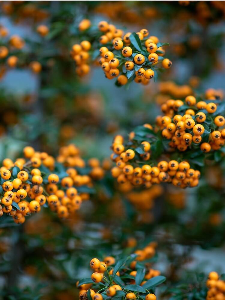 Rowanberry by m-rzeszotarska