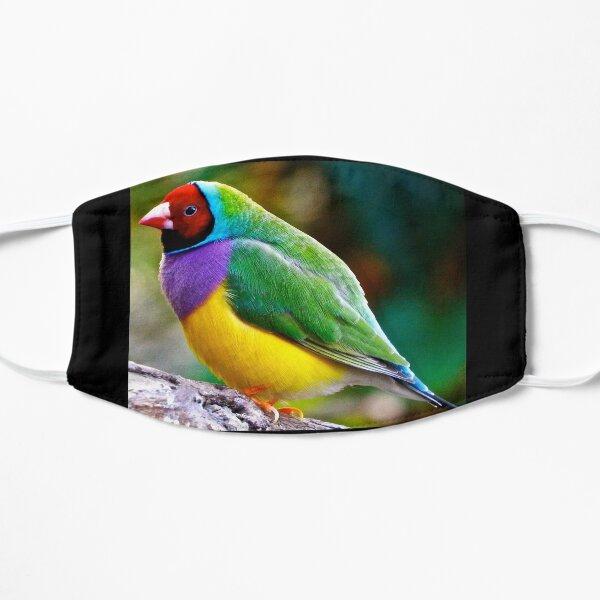 Australian Gouldian Finch; an Endangered Species Mask