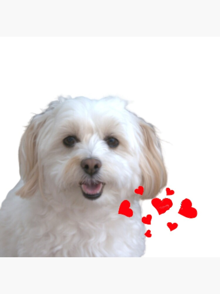 """Cuddly Coton de Tulear """"Silly Lily"""" cute puppy by LiaMoon"""