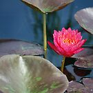 Painted Water Lily by Sunshinesmile83