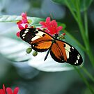 Butterfly 12 by Sunshinesmile83