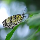 Butterfly 16 by Sunshinesmile83