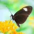 Butterfly 23 by Sunshinesmile83