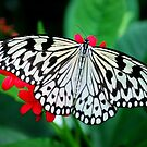 Butterfly 24 by Sunshinesmile83