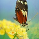 Butterfly 26 by Sunshinesmile83