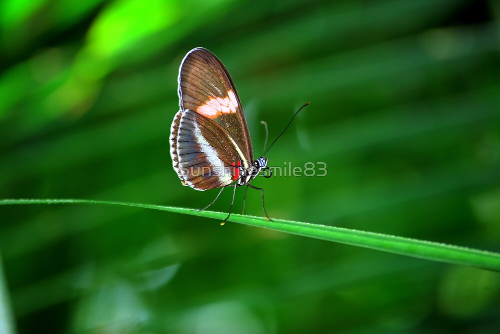 Butterfly 28 by Sunshinesmile83