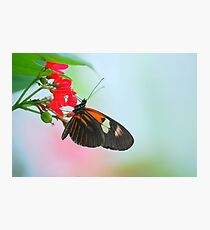 Butterfly 30 Photographic Print