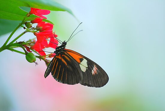 Butterfly 30 by Sunshinesmile83