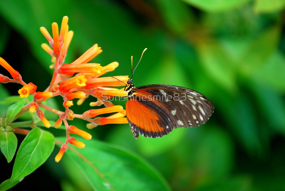 Butterfly 32 by Sunshinesmile83