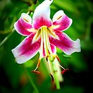 Star Lily in Hyper Color by Sunshinesmile83