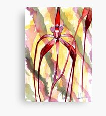 Crimson Spider Orchid Canvas Print