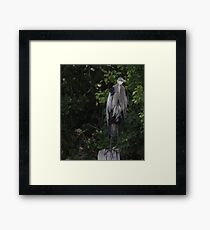 Great Blue Heron from Okauchee Wisconsin Framed Print