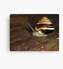 Banded Snail (Cepaea hortensis) Canvas Print