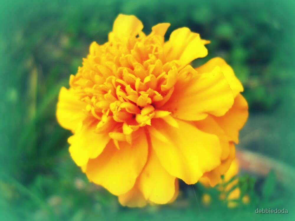 Midwest Marigold by debbiedoda