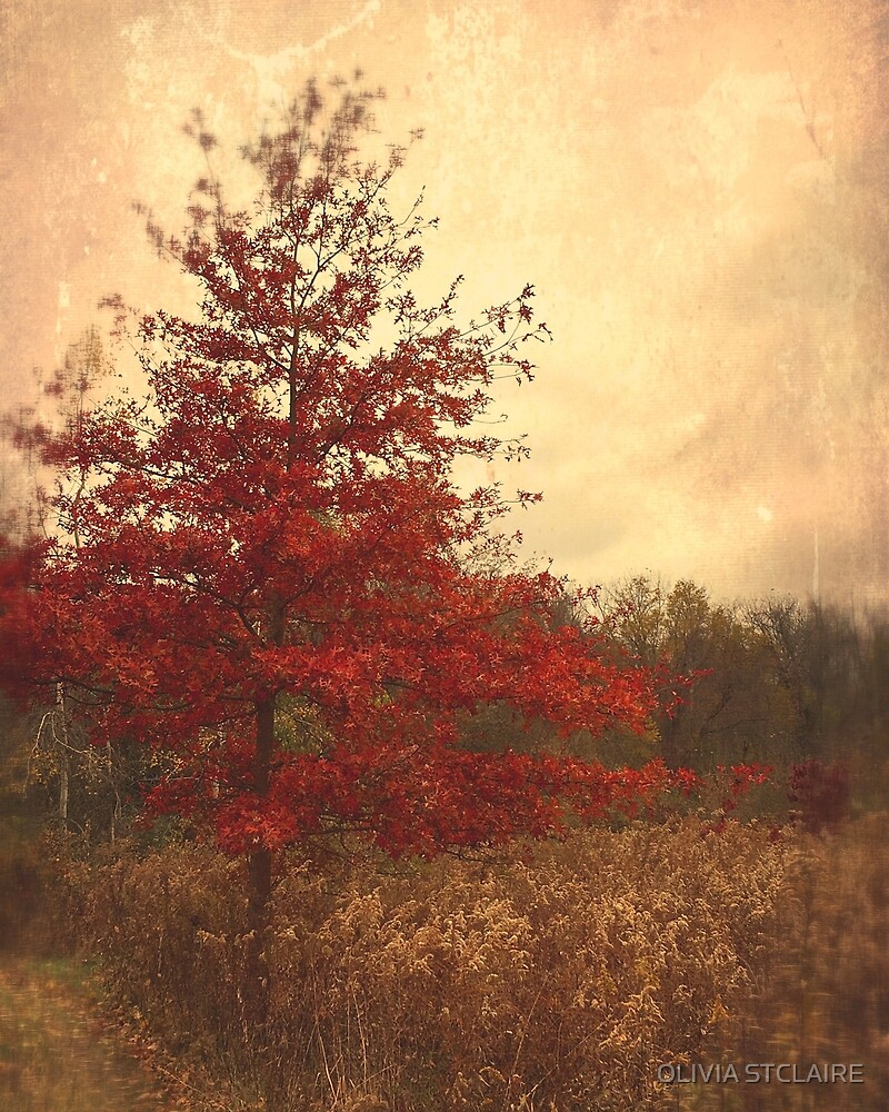 Red Oak Tree by OLIVIA JOY STCLAIRE