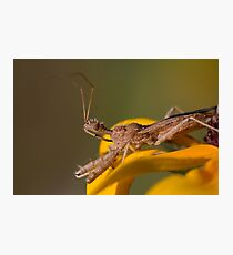 Spined Assassin Bug Photographic Print 42b6c00a52eaa