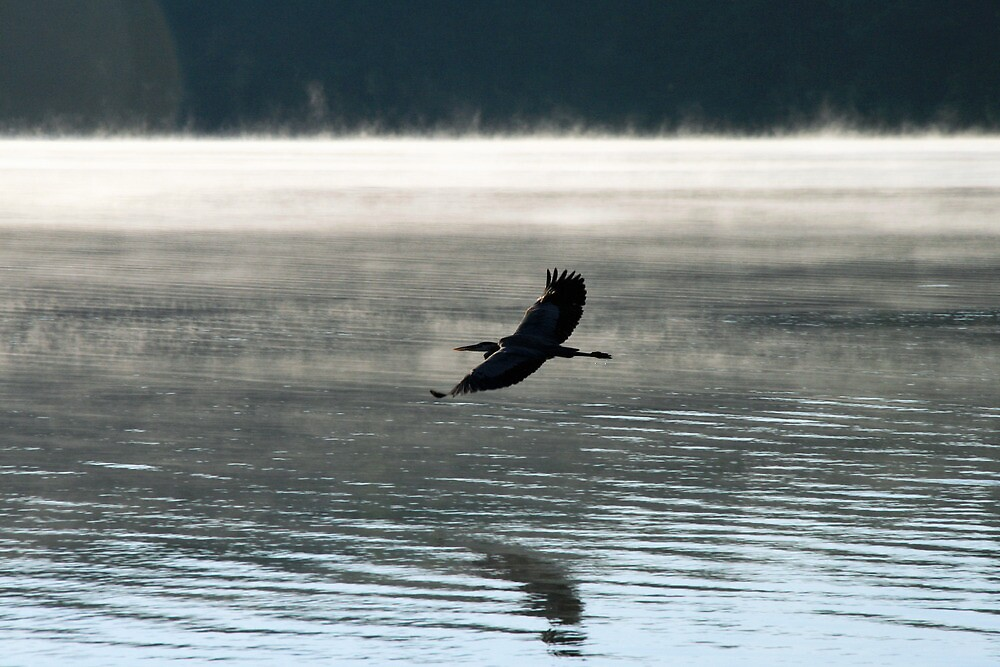 Great Blue Heron Flight Over The Mist by Geno Rugh