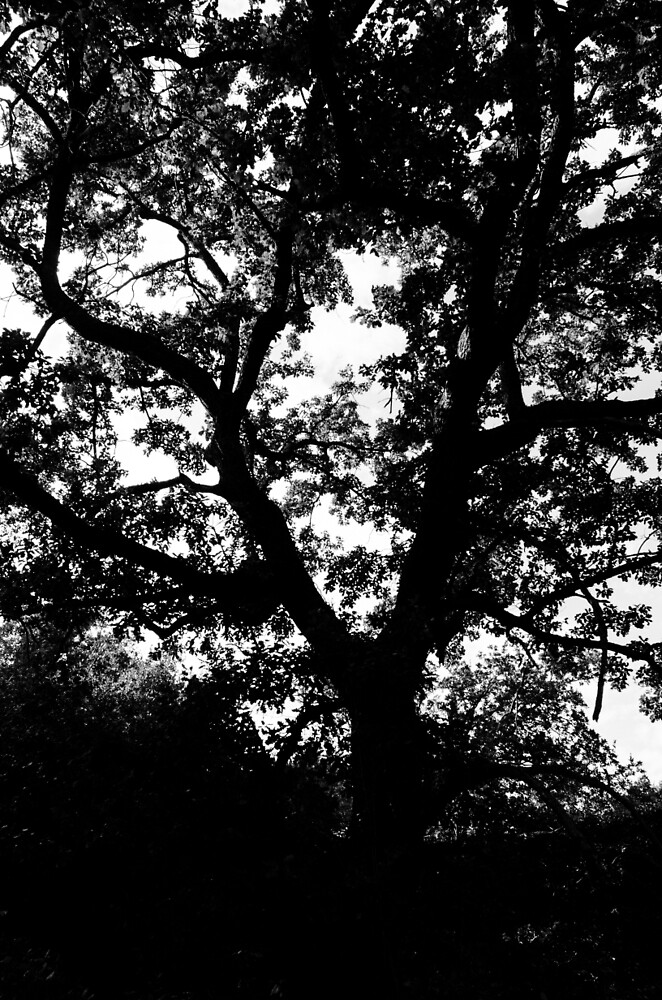 Tree of Life  by Andrea Mazzocchetti