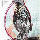 Animal Atlas - North Pacific Eagle by Alexcarletti