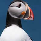 Atlantic Puffin II by naturalnomad